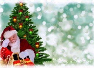 Ako vybrať vianočný stromček